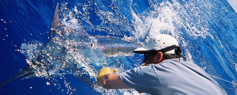 Saltwater Fishing Guide